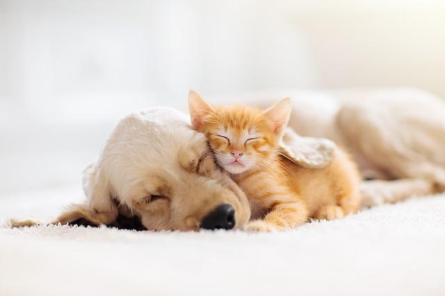 犬と猫が夢に出てくるイメージ