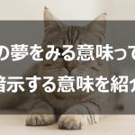 猫の夢を見る意味って?暗示する意味を紹介